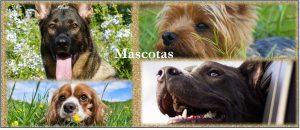Casa rural cerca de Madrid, mascotas, grupos, familias Mascotas Perros Gratis
